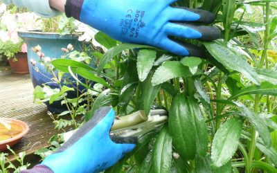 The best waterproof gardening gloves for men & women