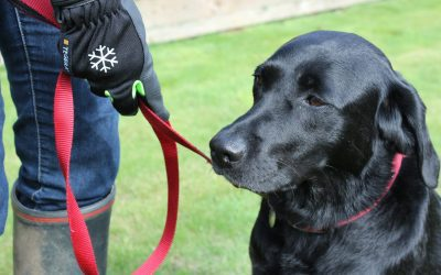 The best thermal & waterproof gloves for winter dog walking and more!
